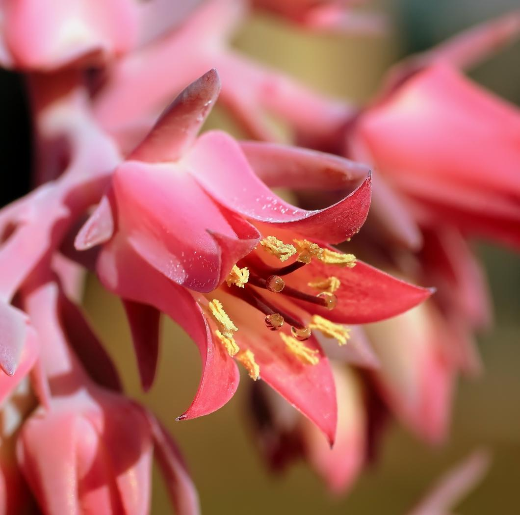 Echeveria-Margrit-2009-164-2.jpeg