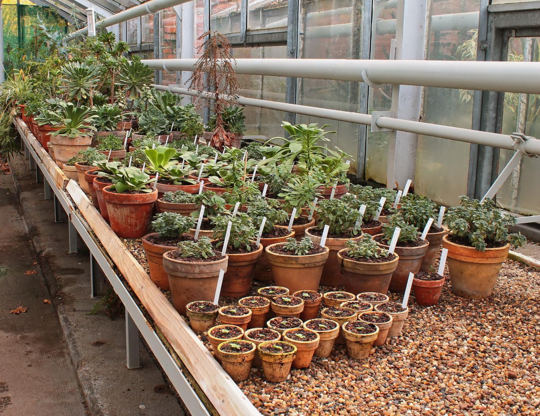 Kanarische-Crassulaceae-1.jpeg